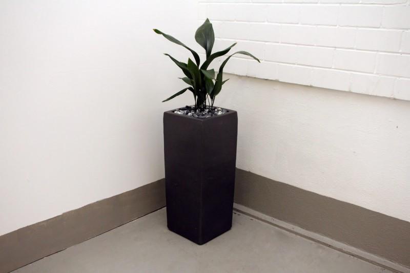 Blumenkübel mit Pflanze